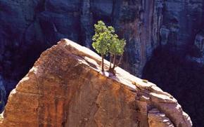 inspirational-tree